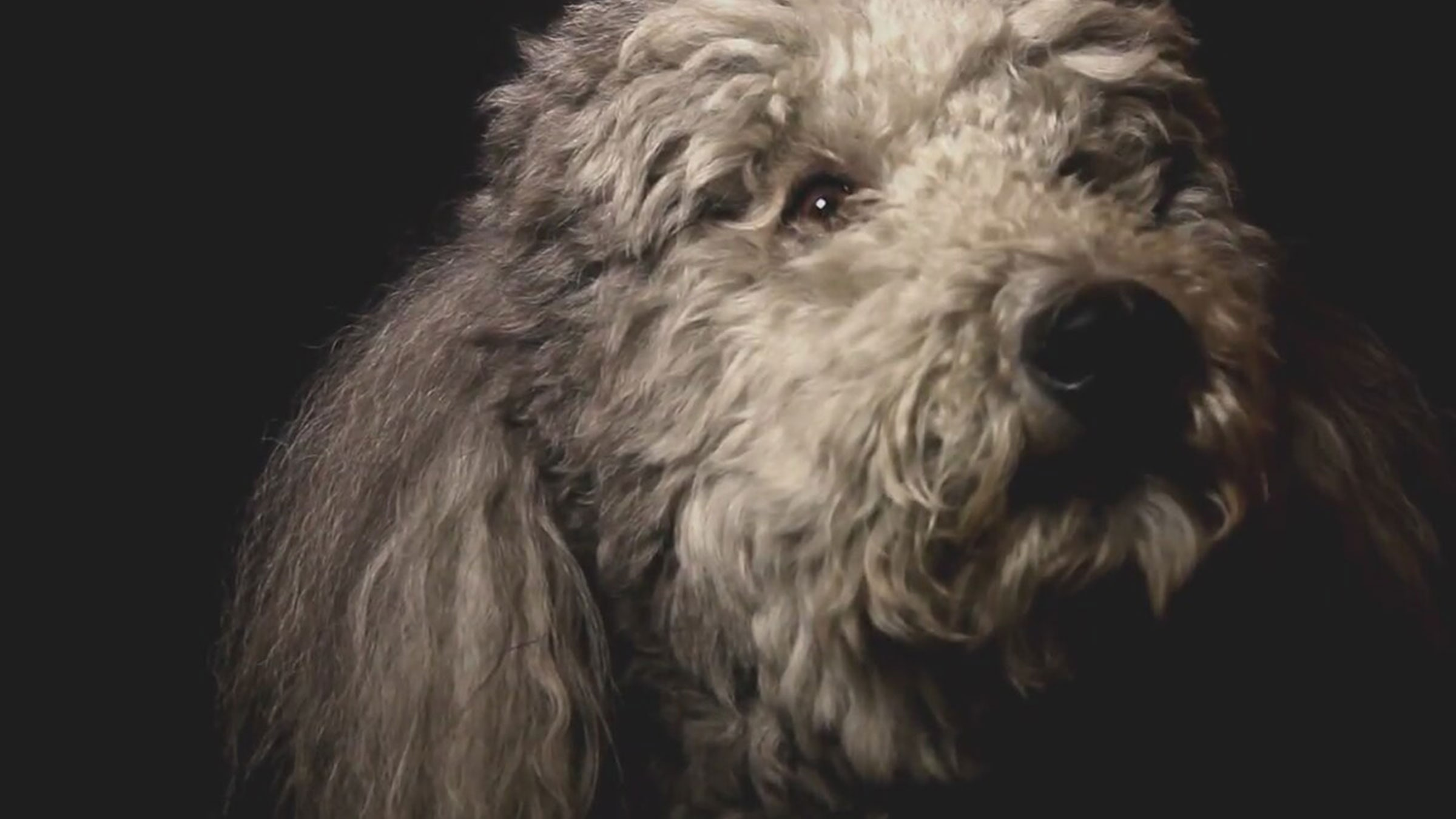 Köpeğin Kalbi