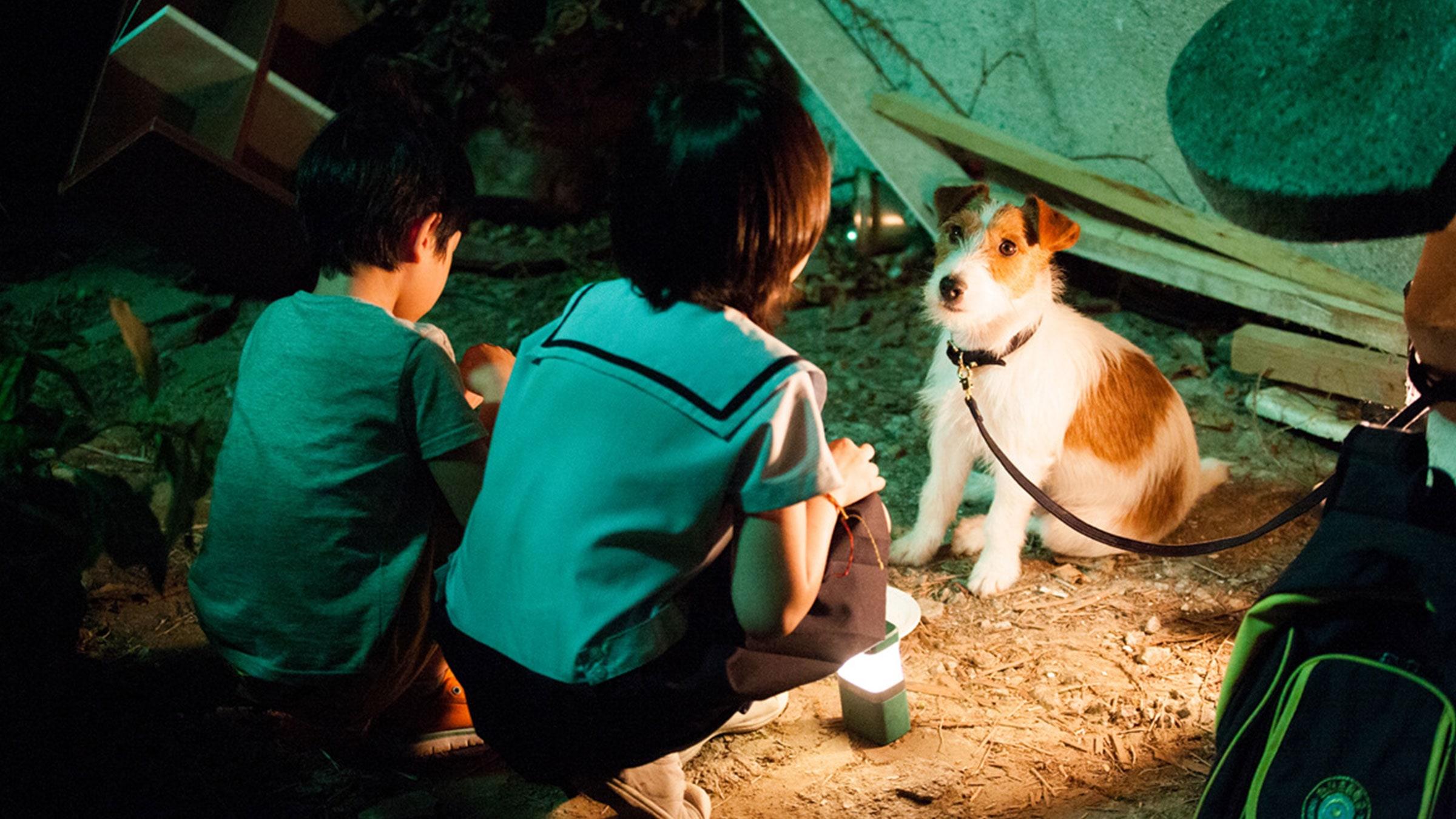 Bir Köpeği Kaçırmanın Mükemmel Yolu