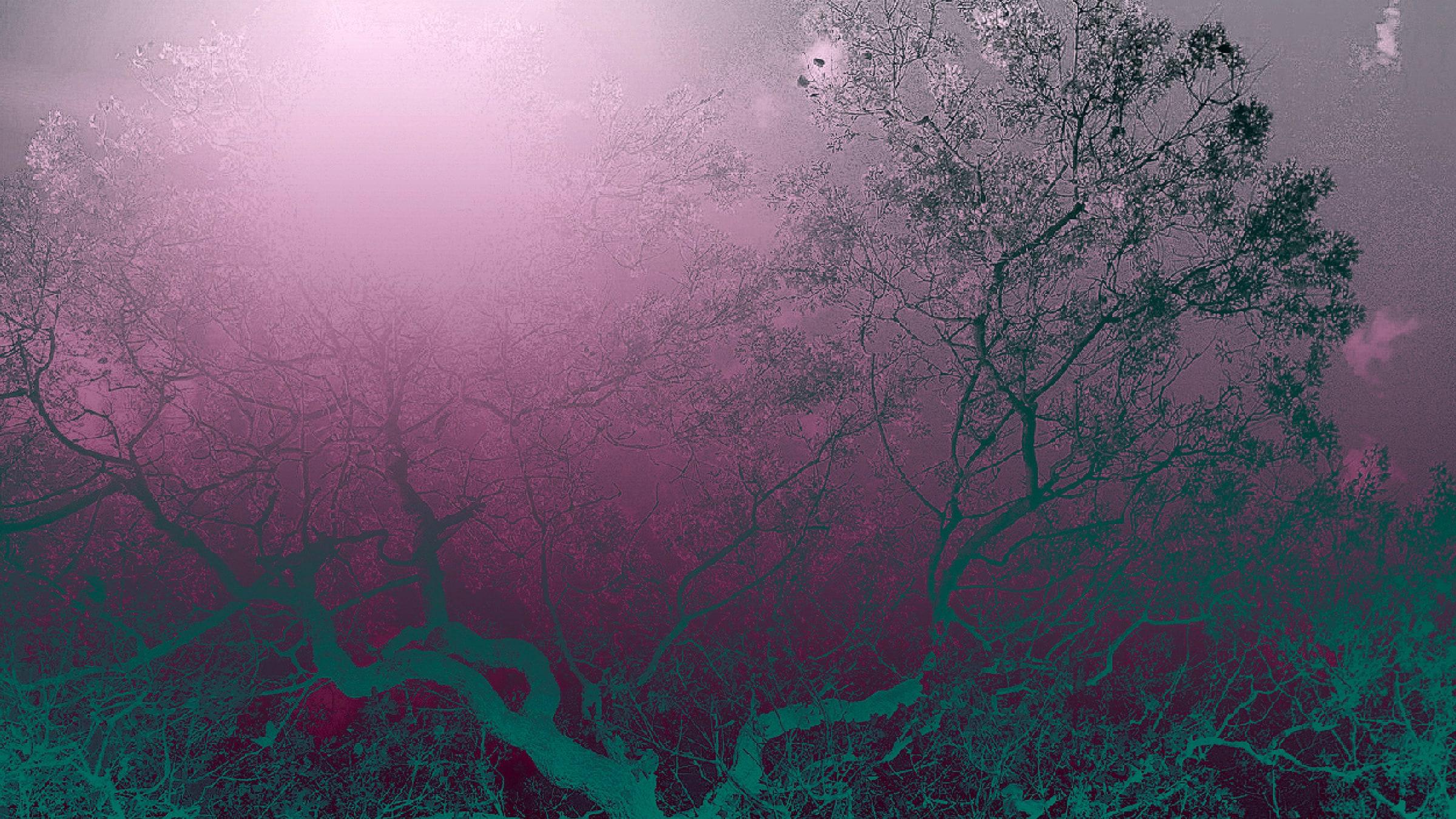 Gökyüzü Işıldıyor <br/>Çehov'a Övgü