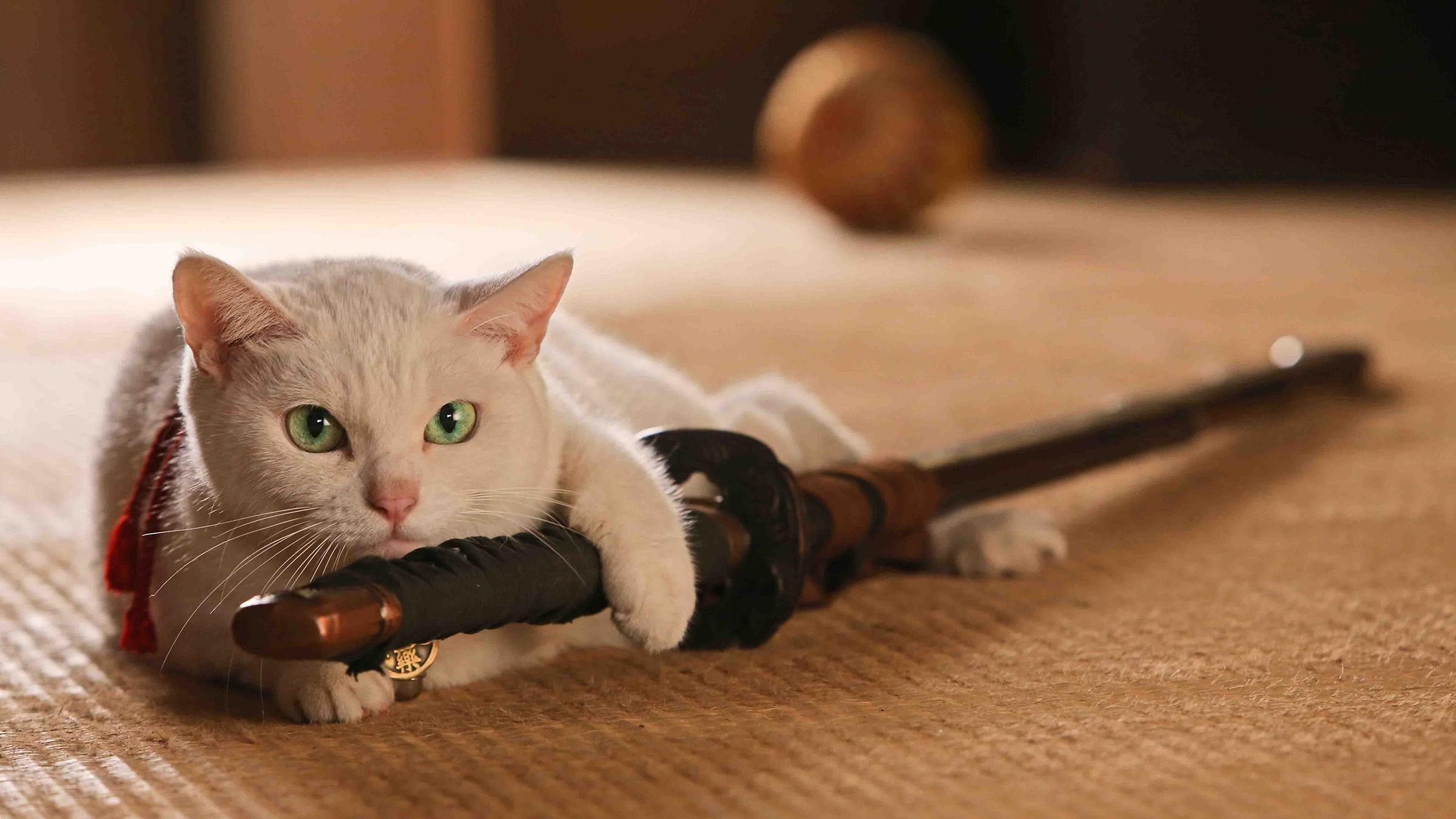 Samuray Kedi