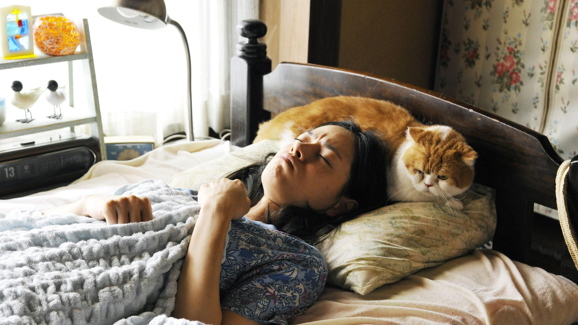 Kedi Kiralama Servisi